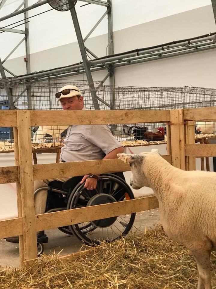 sheep viewer.jpeg
