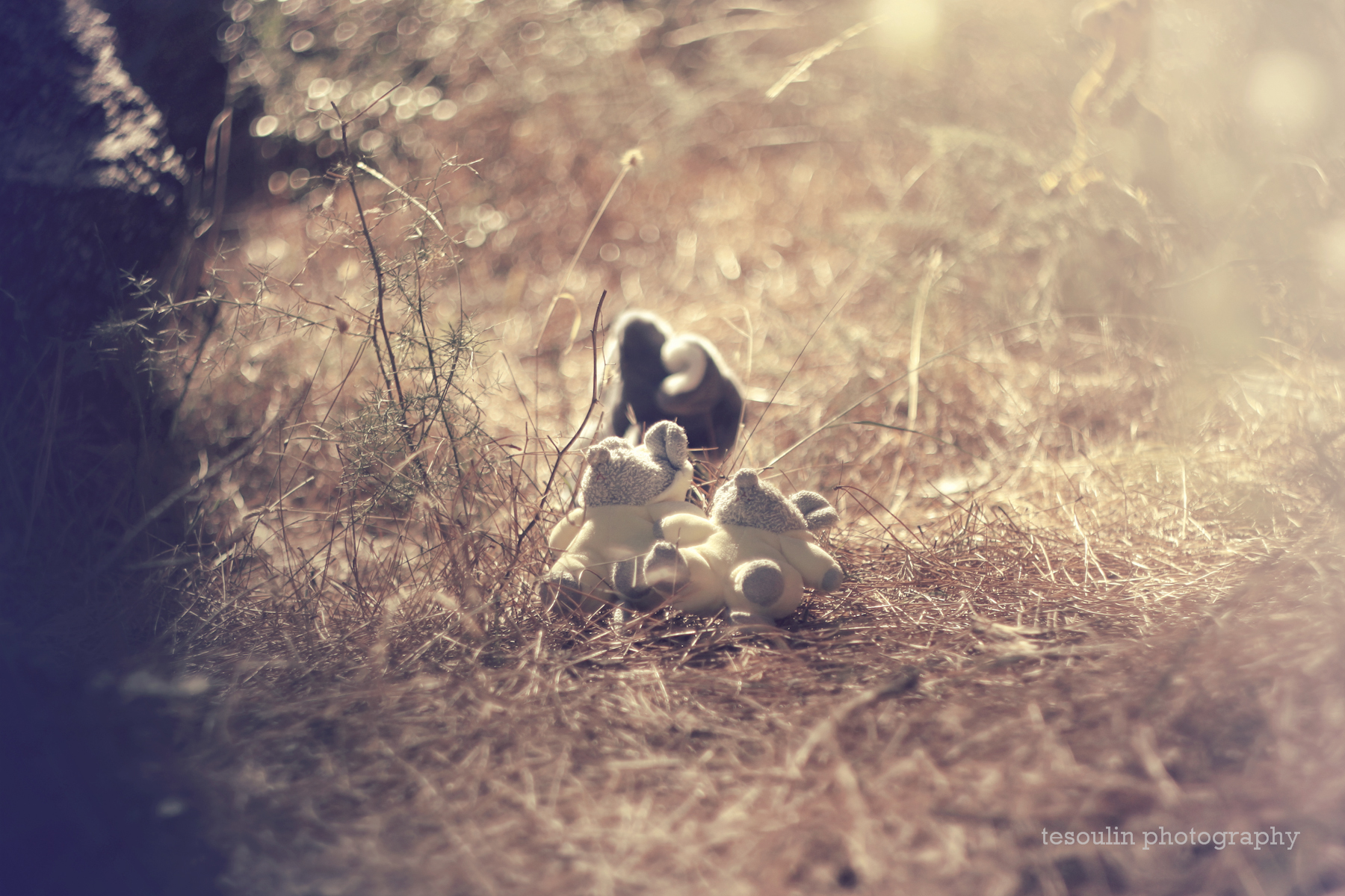childhood nostalgia - tesoulin photography