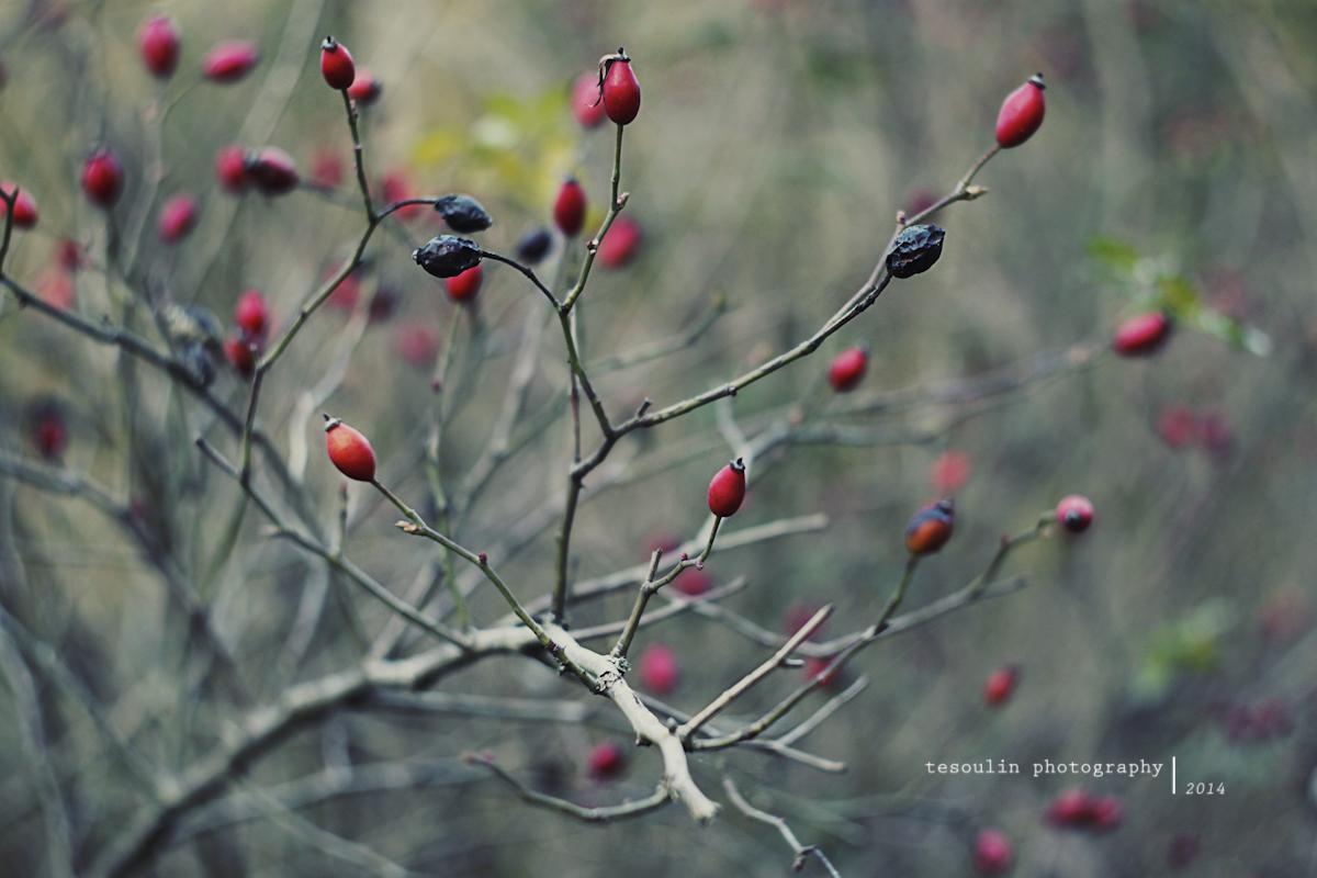 Tesoulin Photography - Ravine -1