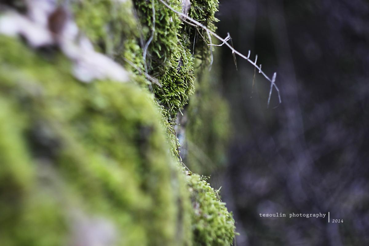 Tesoulin Photography - Ravine -3