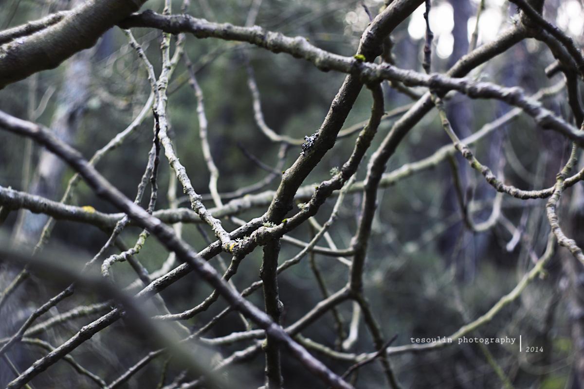 Tesoulin Photography - Ravine -5