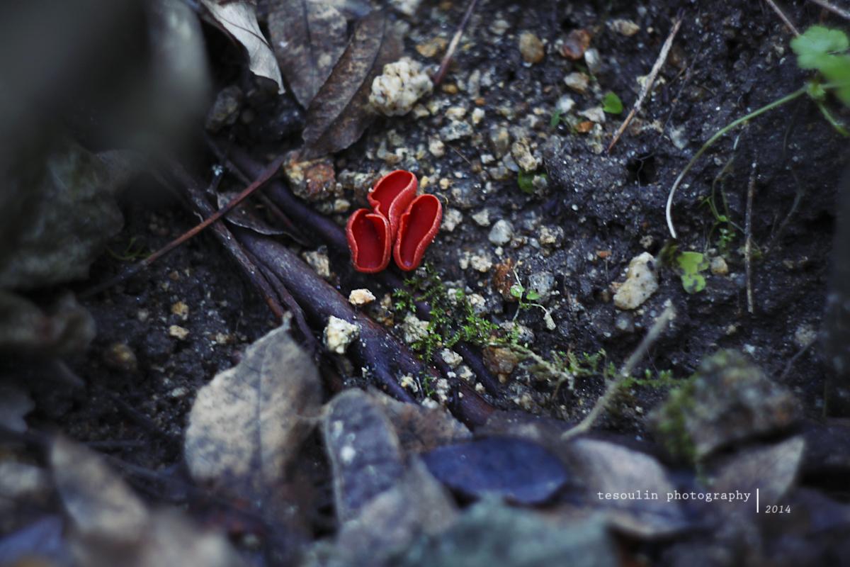 Tesoulin Photography - Ravine -6