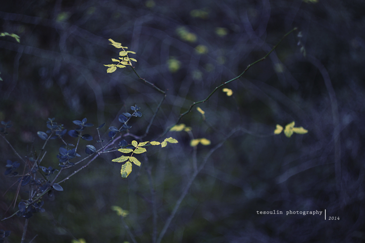 Tesoulin Photography - Ravine -7