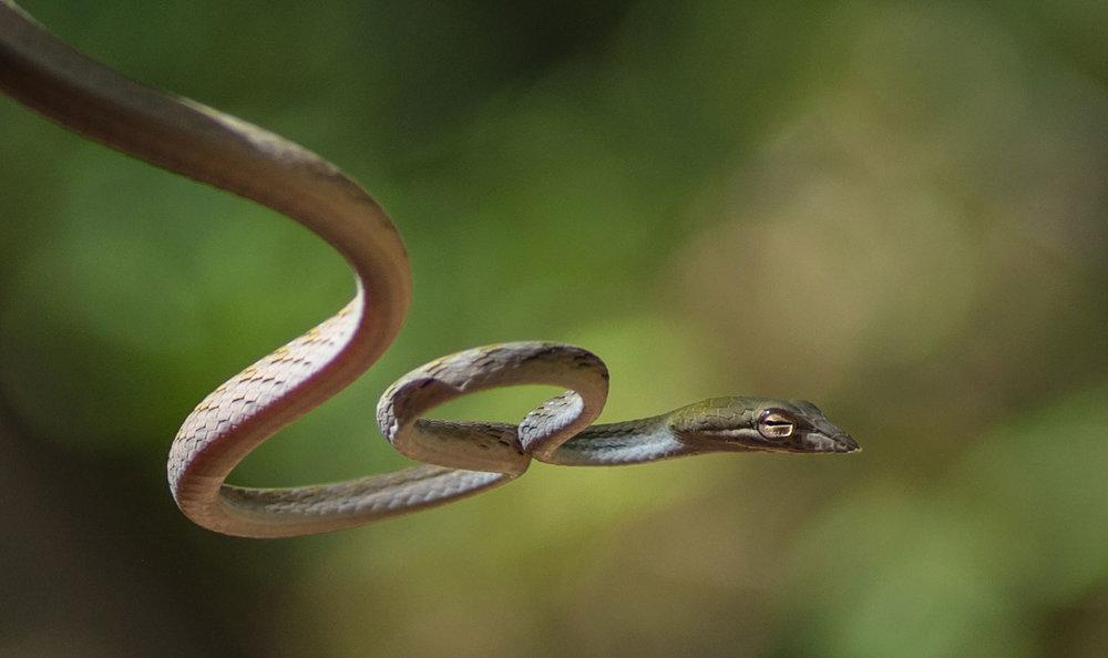 Surprise Snake