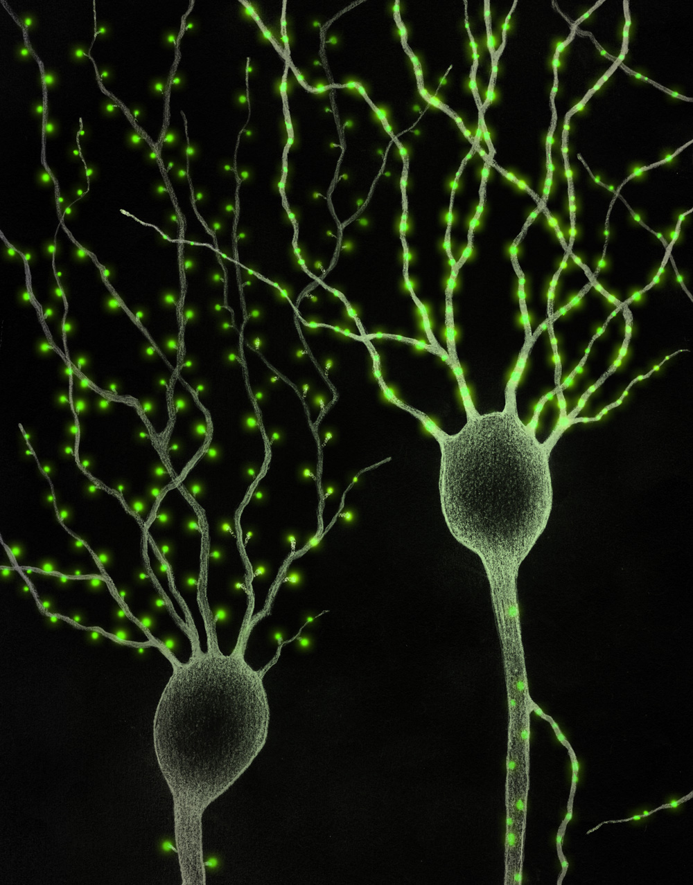Synapses on pyramidal neurons, with spinal structures (L) and without (R)