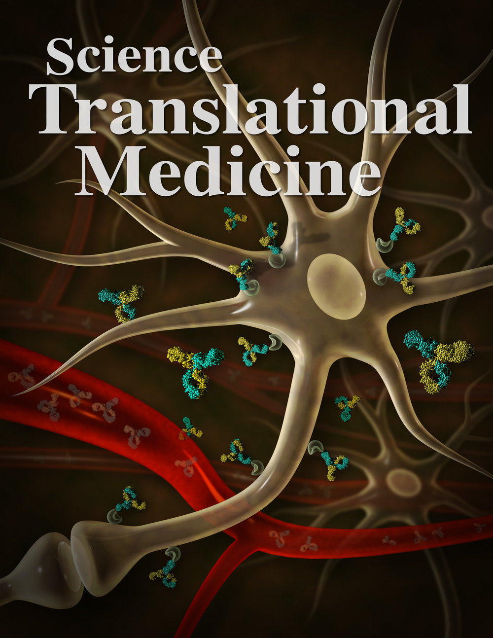 Crossing the Rubicon - Breaking Through the Blood-Brain Barriar  Atwal et al. and Yu et al.,  Science Translational Medicine ,   v3 n84