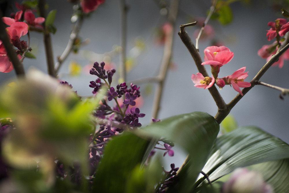 0417_KG7_FLOWERS0332.jpg