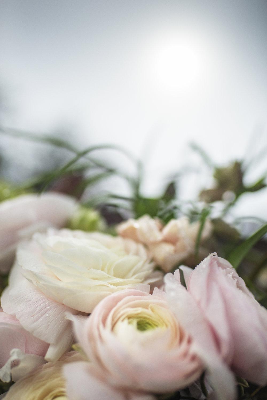 0417_KG7_FLOWERS0220 copy.jpg
