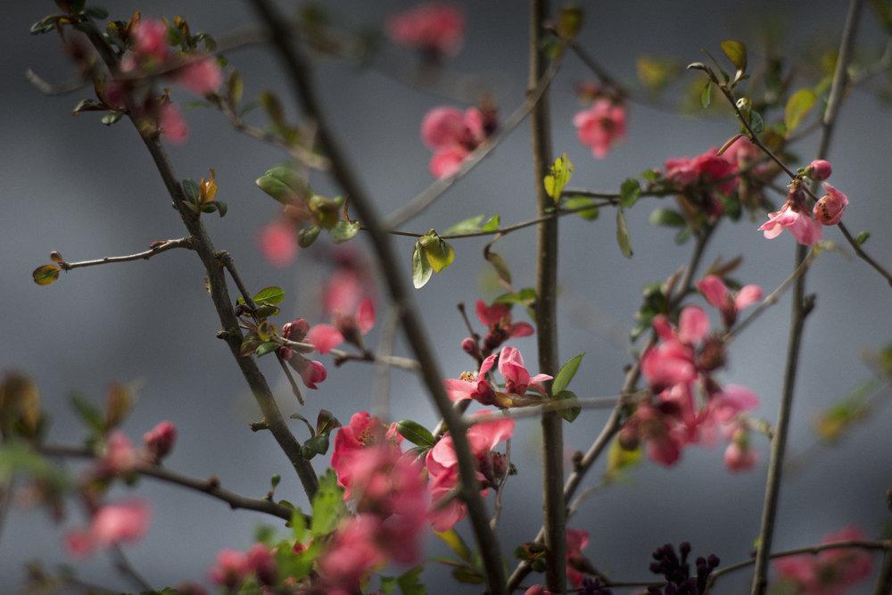 0417_KG7_FLOWERS0358 copy.jpg