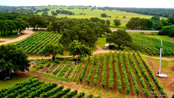 wc_vineyards_600.jpg