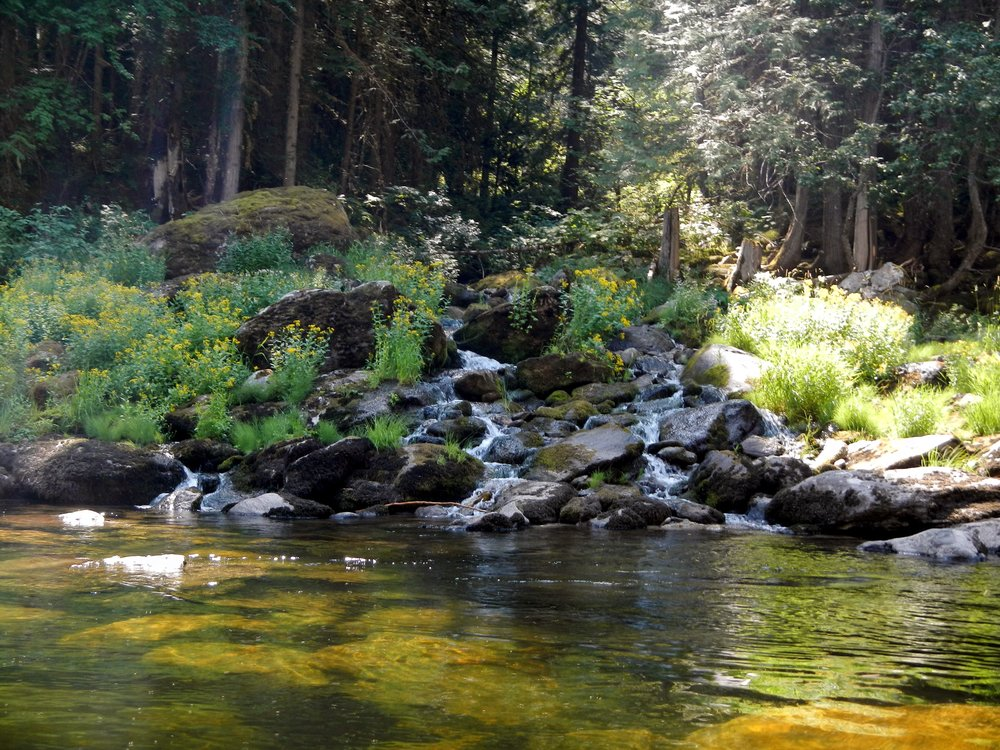 clearwater river with creek entering.JPG