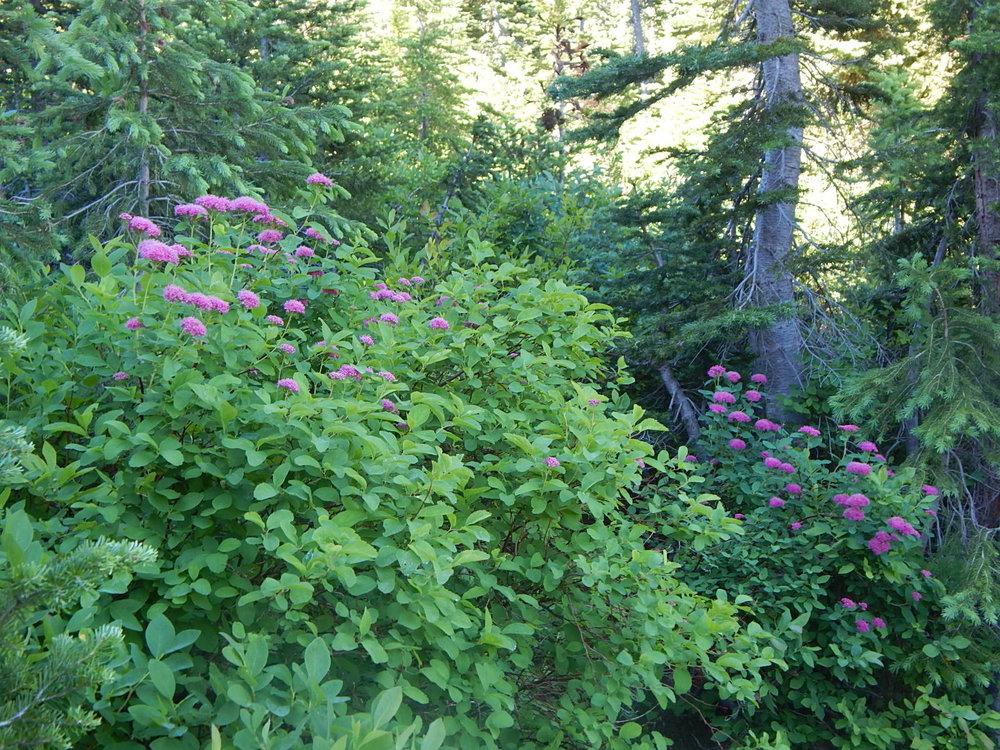 more flora.JPG