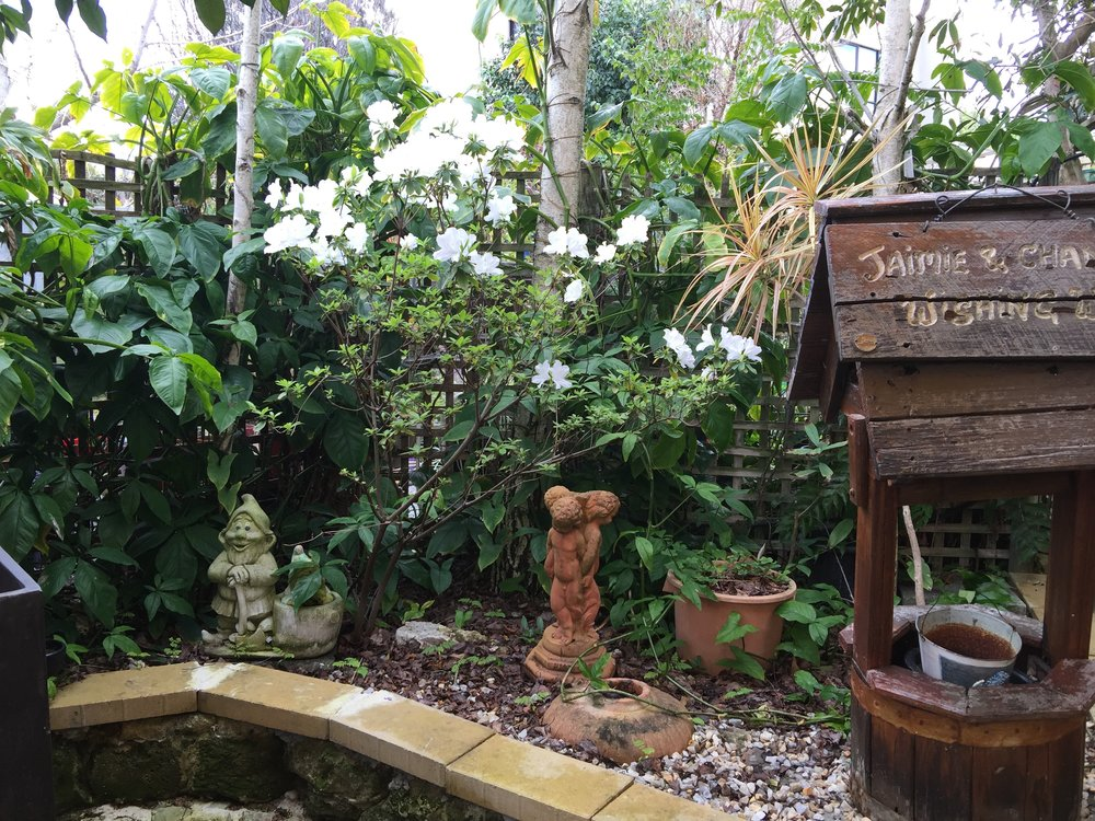 Garden - wishing well.jpg