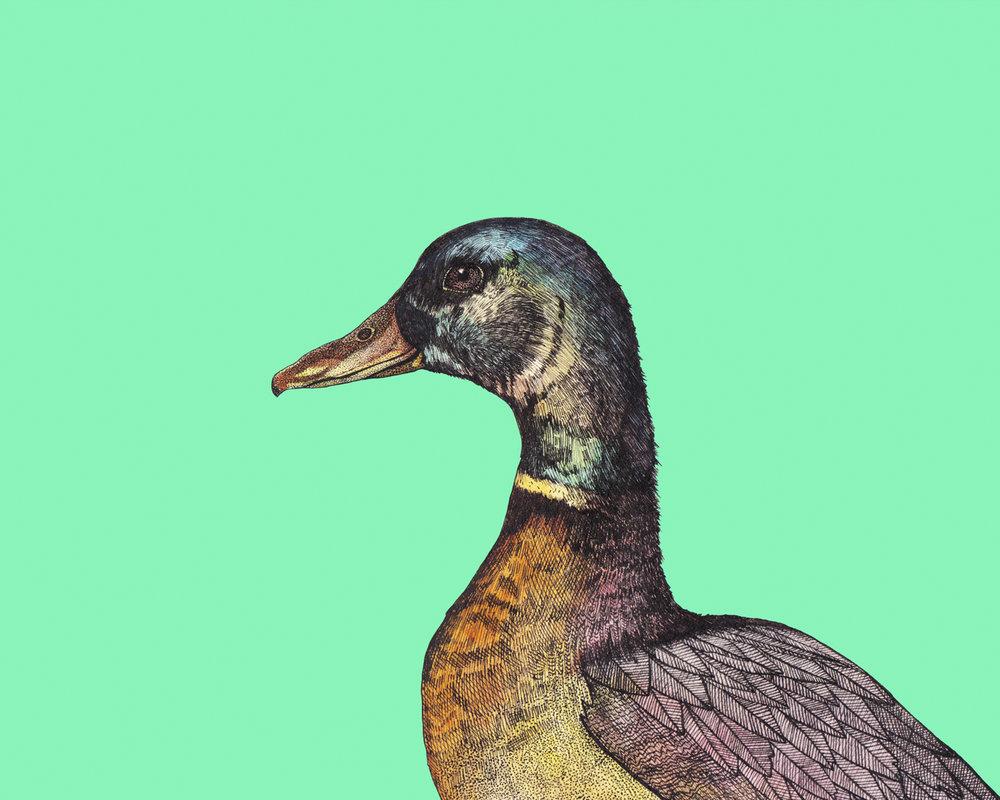 duck 8x10.jpg