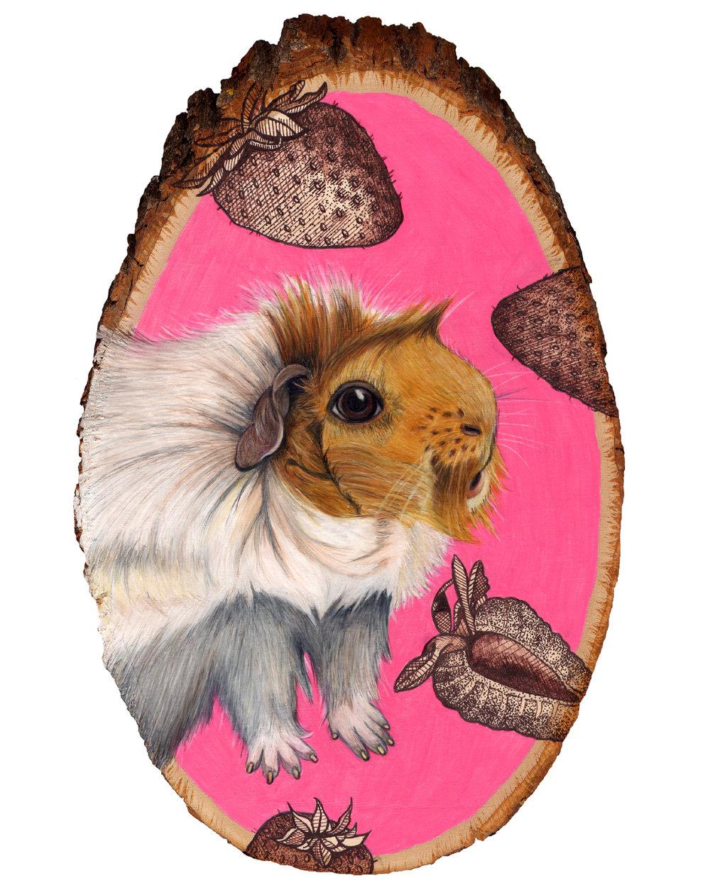 guinea pig 8x10.jpg