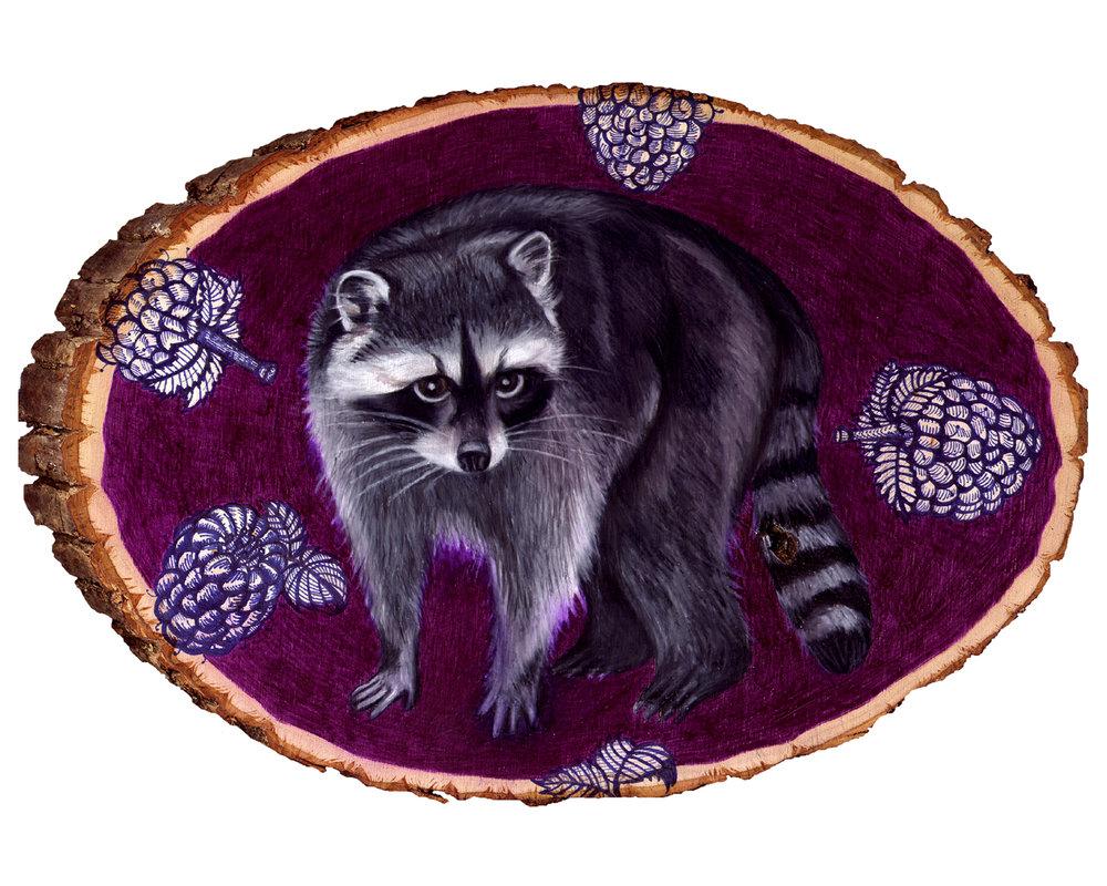 raccoon 8x10.jpg