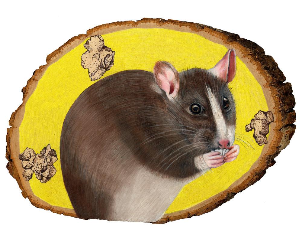rat 8x10.jpg