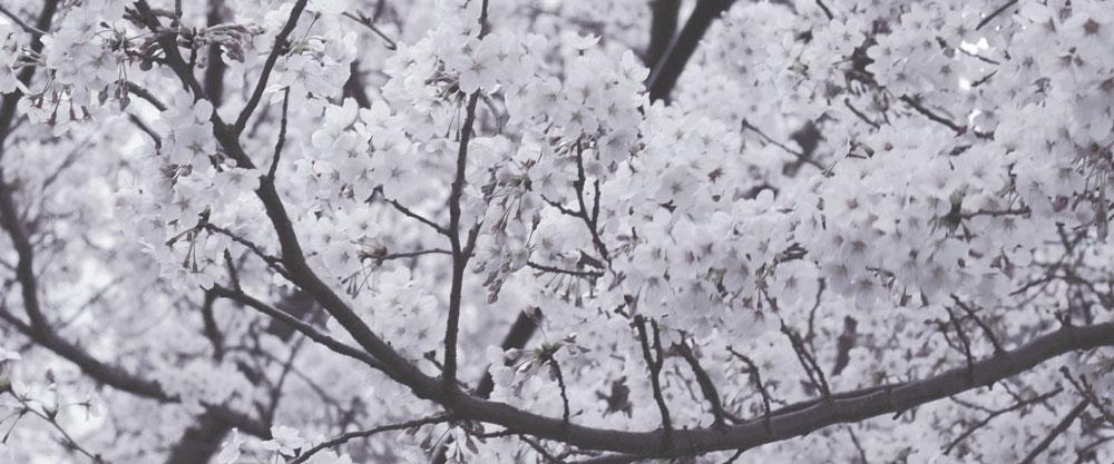 yuki-yoshida-104560-unsplash.jpg