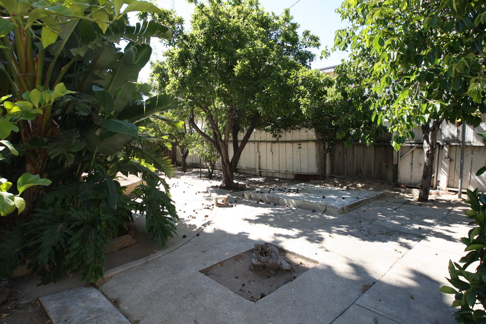 Backyard towards house.JPG