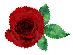Rose-72.png