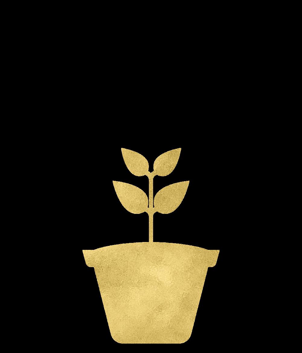 Gold Foil Plant2-07.png