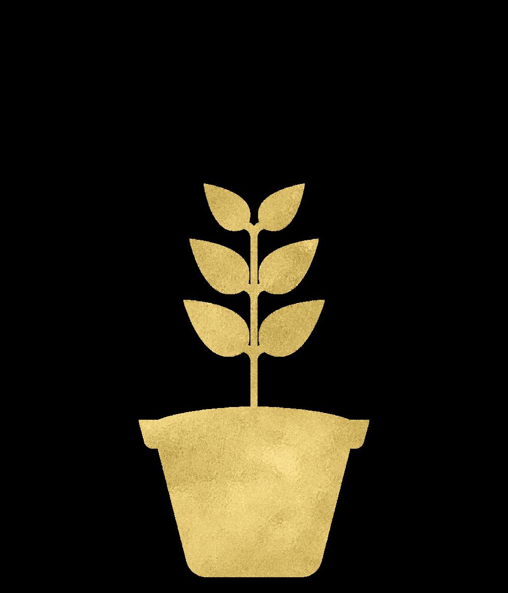 Gold Foil Plant3-08.png