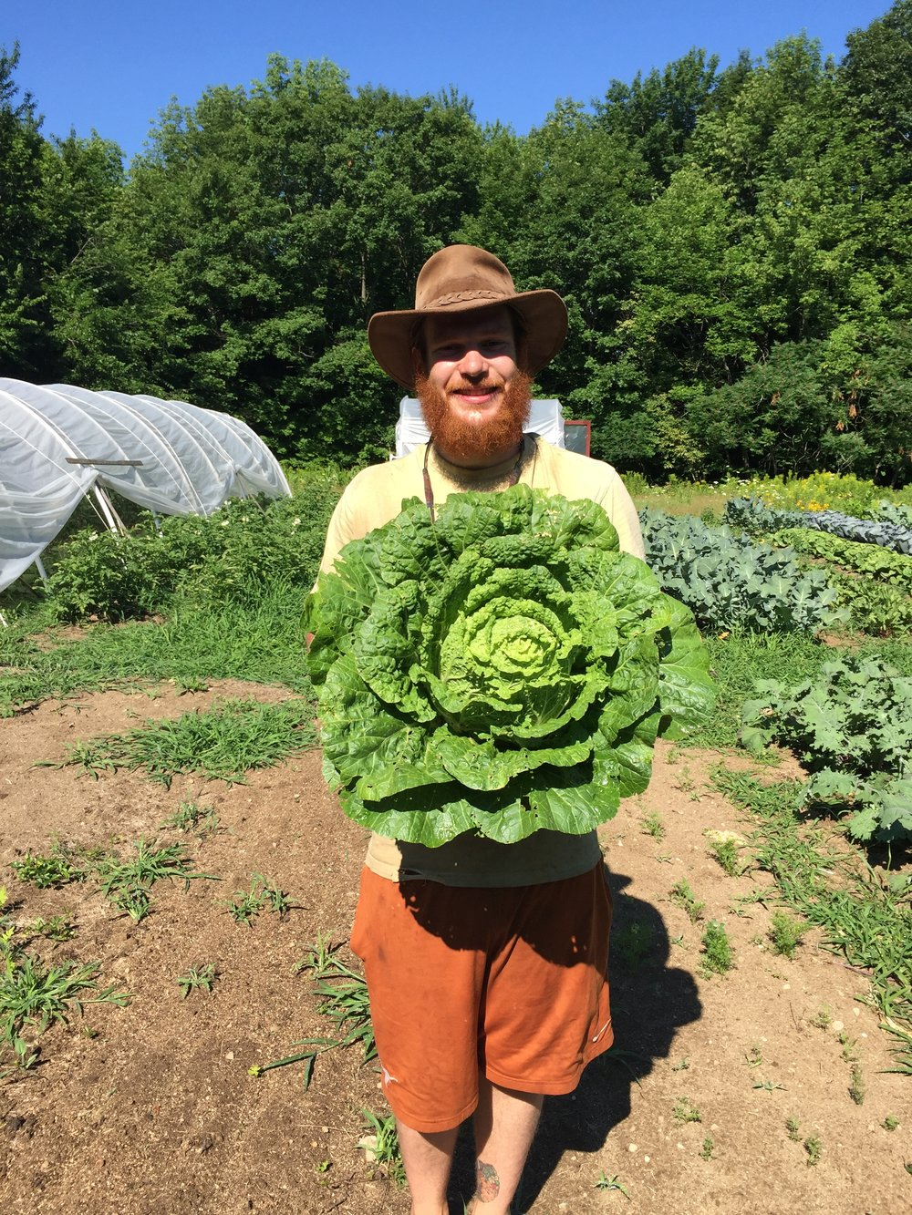 The Cabbage King