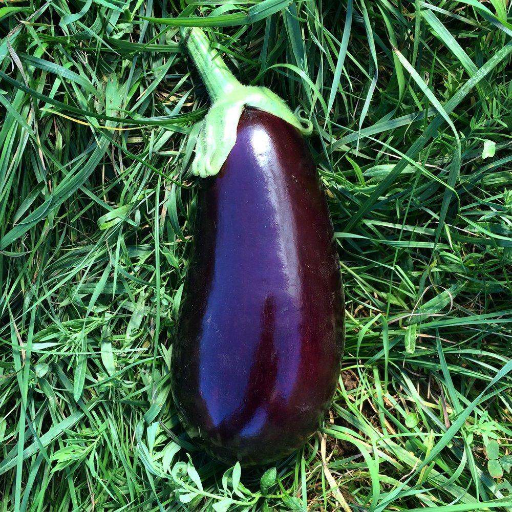 Galine Eggplant...total perfection