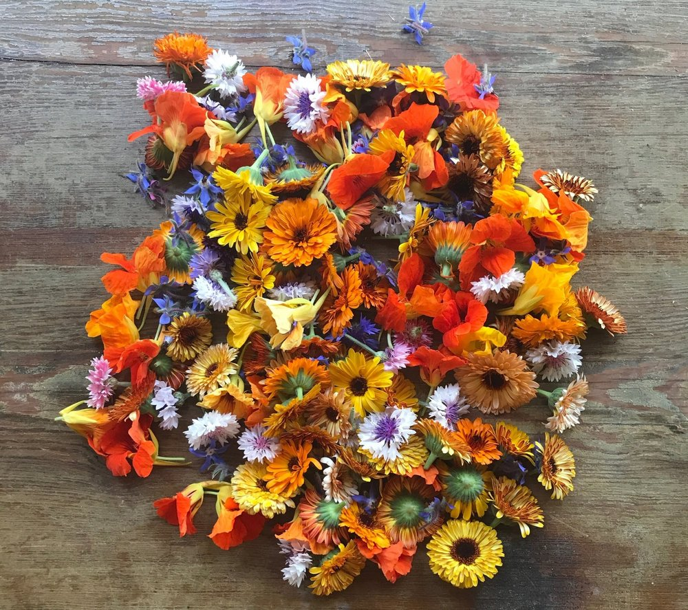 Edible Flowers! Nasturtium, Calendula, Centaurea, and Borage!