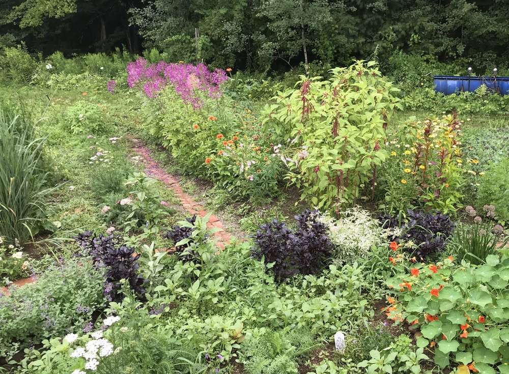 A corner of the flower garden. See the cleomes in the top left quadrant?