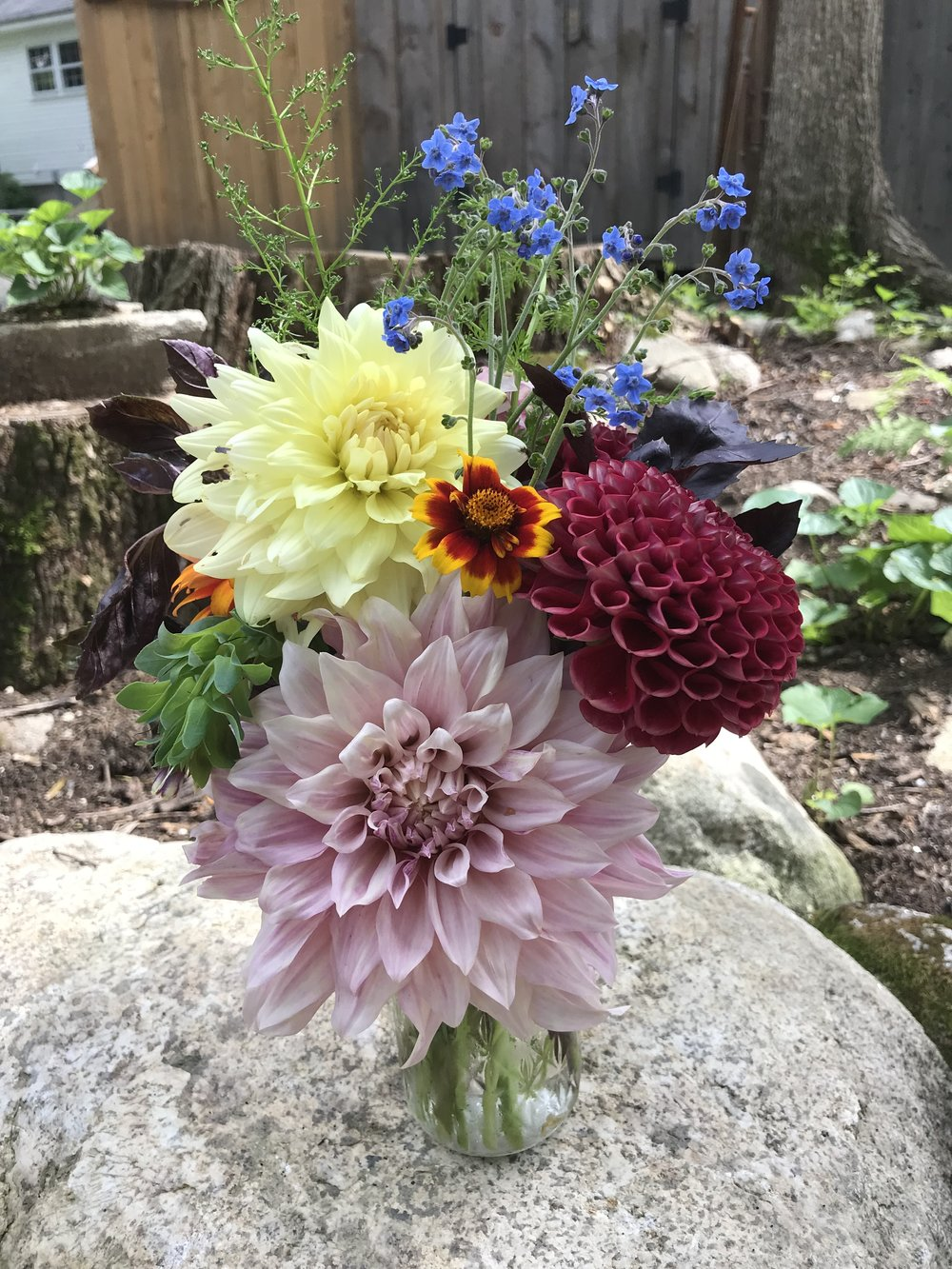 Thank God for Dahlias!