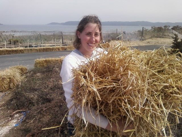 Straw , made up of grassy stems, usually second cutting after the seed heads have been harvested for hay. We use straw because hay would introduce non-indigenous seeds. Straw us used to trap eroded sediment.