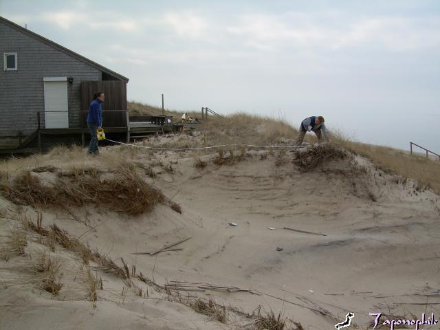 The blow out was growing several feet each week. At the end of February, we measured the opening in the dune at 55 feet wide, 12-20 feet deep and 80 feet from toe of dune at the beach, to back dune. The foundation posts for the nearest home (not visible here) were 12 feet away. The home belonged to an absentee owner.