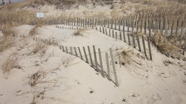 We added additional layers of fencing and planted beach grass.