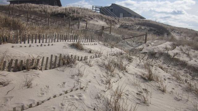 We added more fencing as the sand collected and planted beach grass.