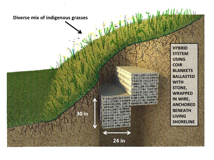 "It seems a simple solution to use ""ballasted Coir"" (with limited stone ballast).  I would like to experiment with this innovative ballasted Coir, as a hybrid system, buried beneath our ""Living Shoreline"".  I believe this hybrid system could provide additional time delay, protecting property from continuing, possibly catastrophic damages. The Coir would also be anchored but ballast would prevent loss during exceptional storms."