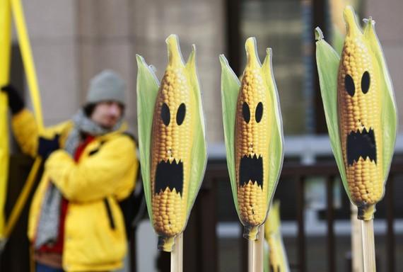 Corn_GMO_Genetically_Modified_Halloween_Reuters-thumb-570x384-116703.jpg