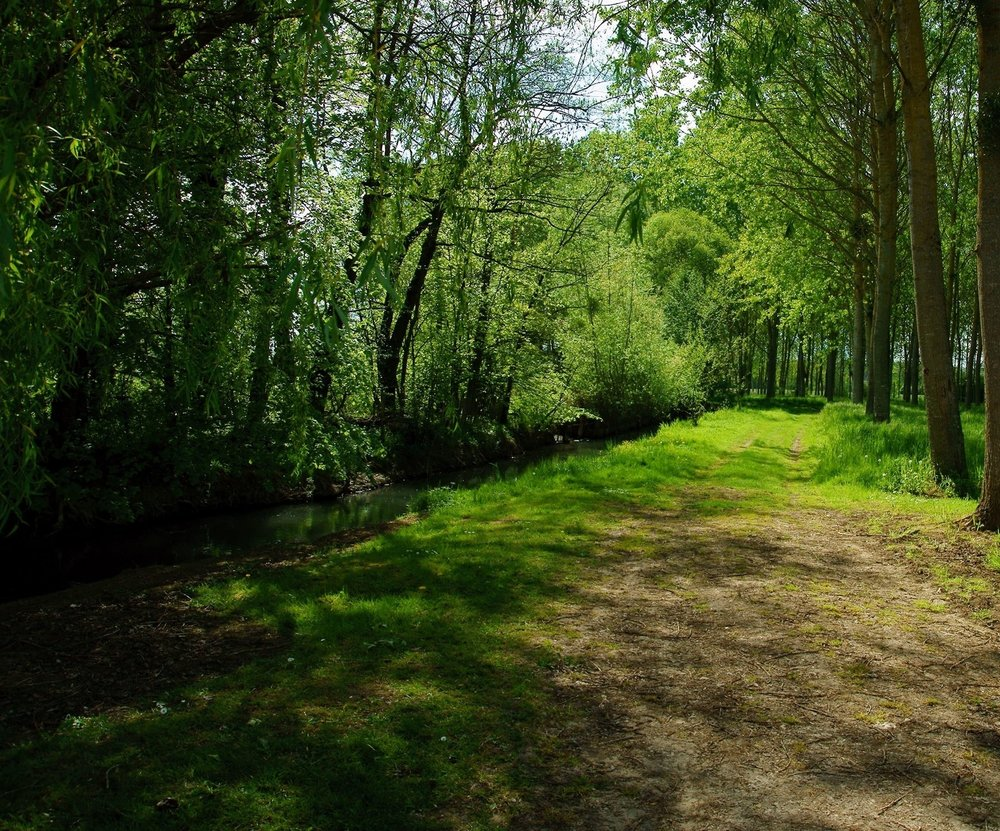 Path make way between the centennial trees. The forêt d'Othe projects the wanderer back into nature.