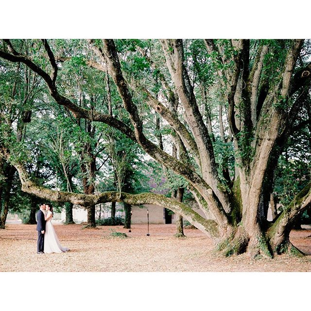 Getting married next to the 400 years old oak trees brings another dimension of symbolic meaning to the ceremony.  @daria_shabayeva and @_hit_77's poetic wedding. Moment beautifully captured by talented @maxkoliberdin  #destinationwedding#francewedding #editorialwedding#editorialphotographer#editorialweddingphoto#destinationweddingphotographer#nyweddingphotographer#nycphotographer  #weddingphotography#weddinginspiration  #pariswedding#brooklynbride #newyorkwedding#modernbride #chicbride
