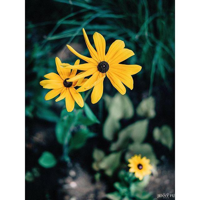 Flowers @chateau_du_fey captured by @jennyfustudio