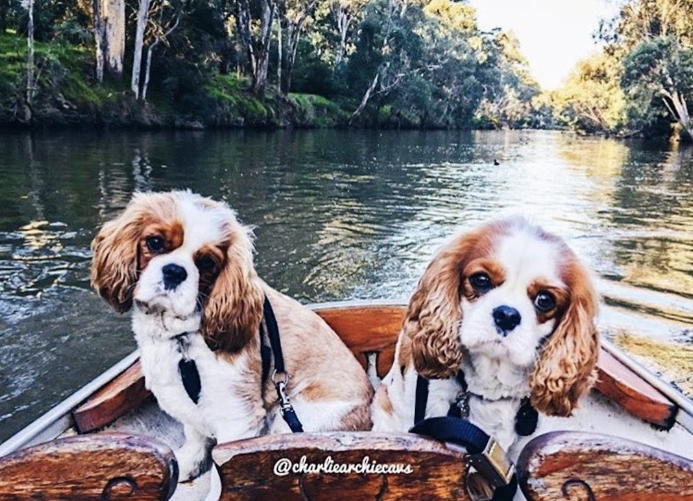 dogs in boats