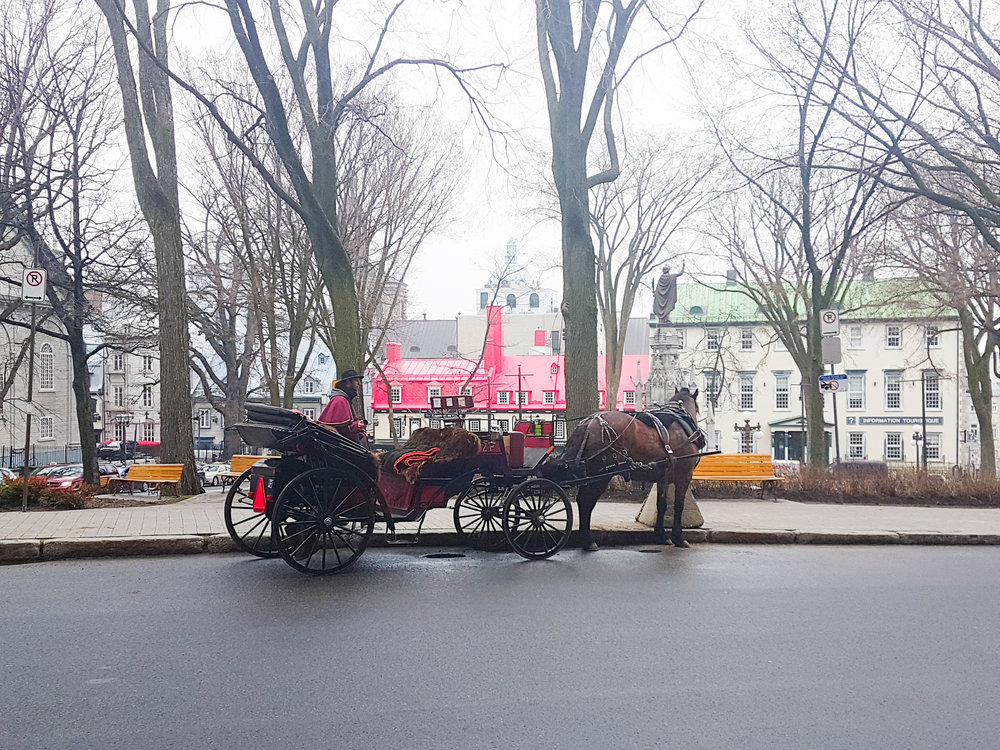 Horse and carriage ride..