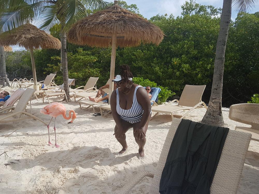 Pink Flamingoes Aruba.jpg