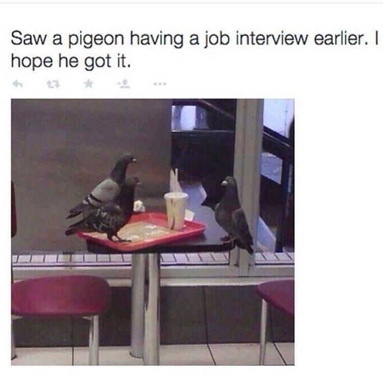 PigeonJobInterview.jpg