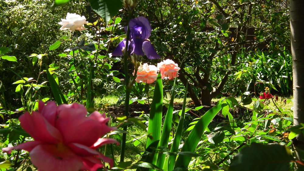 Garden at Kalang Retreat