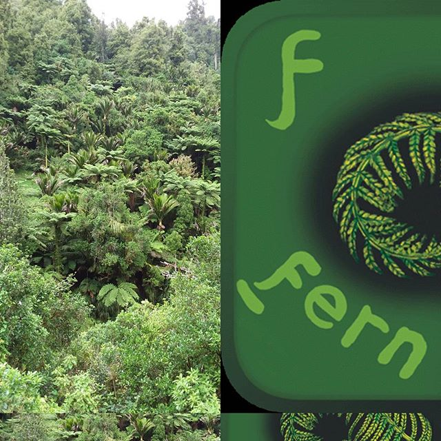 At the Aorangi Scenic Reserve showing stunning examples of Aotearoa native flora. Fern fronds unfurling beneath tree giants...Who recalls the F for Fern poem 😎