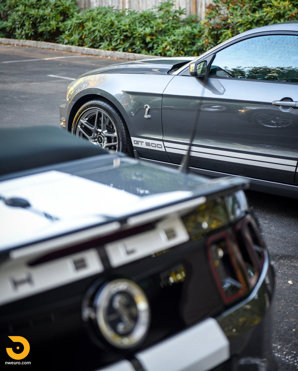 Ford Shelby GT500 Pair-4.jpg