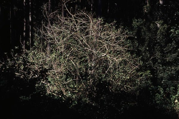 Carl Warner, Disturbance 13 (2007), type C photograph, 60 x 90cm framed, edition of 5