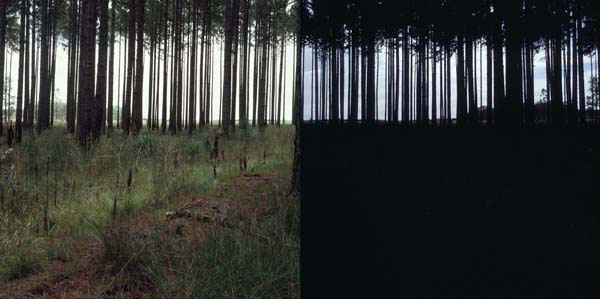 Carl Warner, Nothing To See Hear 5 (2006), type C photograph, 60 x 120cm (framed) edition of 5