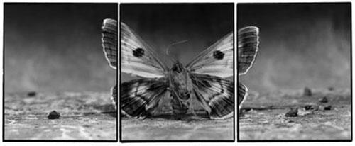 Joachim-Froese-Rhopography-16.jpg